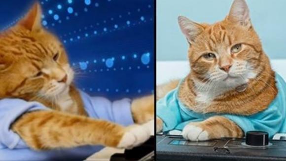 """È morto Bento, il """"Keyboard Cat"""" che ha spopolato in rete"""