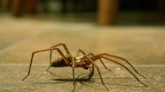 Ragni in casa? Ucciderli è un errore, perché ci possono essere molto utili