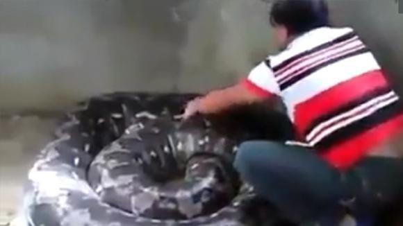 Accarezza l'anaconda e il grosso serpente si alza verso la donna: l'inaspettata reazione del rettile