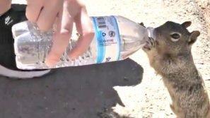 Lo scoiattolo insegue il turista nel torrido canyon. Poi capisce il motivo: la scena è dolcissima