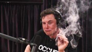 Elon Musk annuncia il progetto di un aereo elettrico, mentre beve whisky e fuma erba