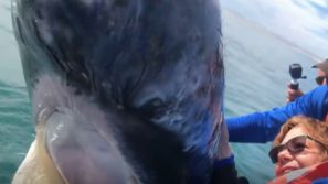 """Una gigantesca balena grigia """"gioca"""" con un'imbarcazione ed i suoi passeggeri"""
