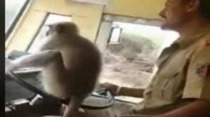 India, fa guidare l'autobus ad una scimmia: autista sospeso