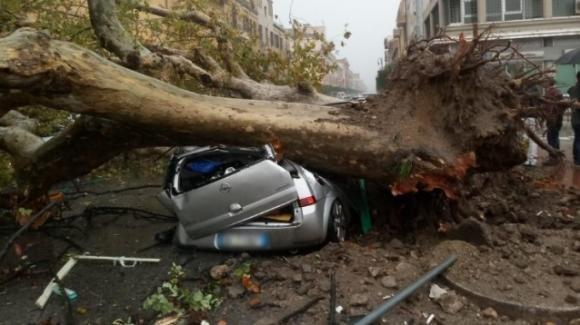 Maltempo: diverse le vittime degli alberi abbattuti e danni per centinaia di milioni