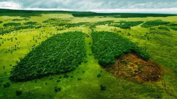 Amazzonia, nell'ultimo anno aumentato il tasso di deforestazione del polmone verde del mondo