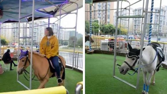 Giostra realizzata con cavalli veri all'interno di un centro commerciale, è polemica!