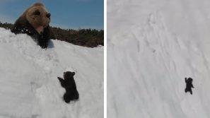 Russia, un orsetto coraggioso cerca di raggiungere la sua mamma: la scena è emozionante
