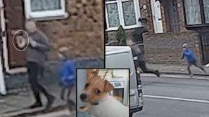 Uno sconosciuto ha rapito la sua cagnolina: l'inseguimento straziante del bimbo ha commosso tutti