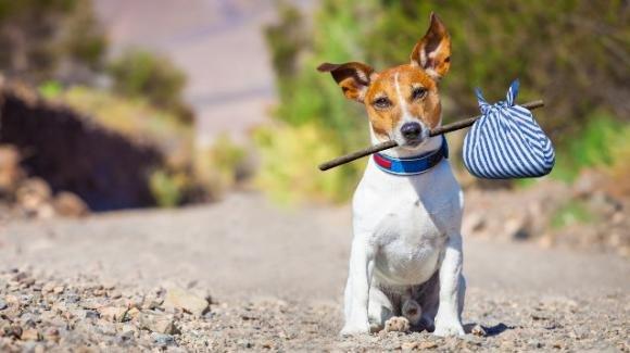Ruba un'auto ma non si accorge del cane, abbandona la vettura ma il cane fugge. Avviate ricerche
