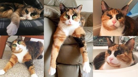 Lilly, la gatta dagli occhi indagatori con migliaia di followers