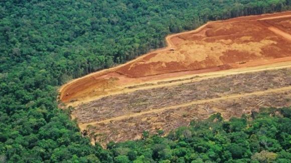 Nel 2018 sulla Terra è sparita una foresta grande quanto l'Inghilterra
