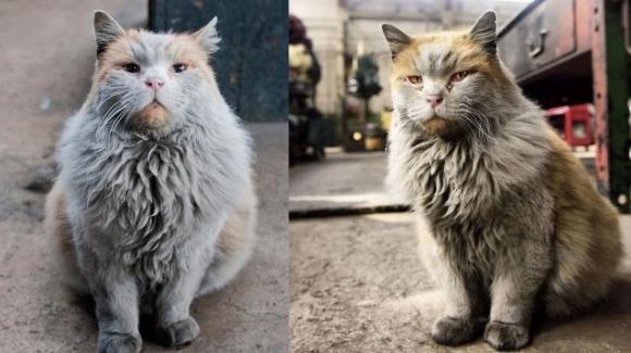 Dirt, il gatto perennemente sporco che vive nel museo delle ferrovie del Nevada