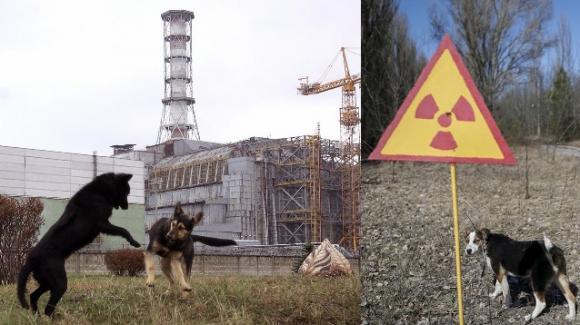 Gli animali della zona di Chernobyl si stanno adattando alla radioattività
