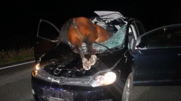 Foggia, cavallo scappa dalla stalla e piomba in strada: forte impatto con auto. Due anziani in gravi condizioni