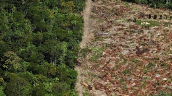 """Foresta Amazzonica: ogni minuto abbattuto uno """"stadio da calcio"""" a causa della politica brasiliana"""