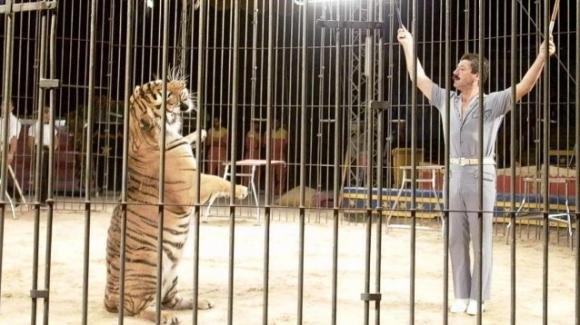 Bari, domatore del circo Orfei sbranato dalle tigri