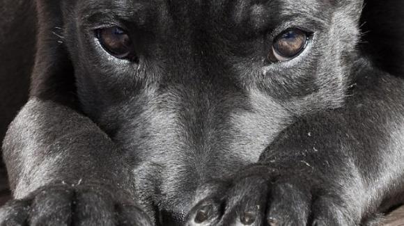 Sardegna, cuccioli di cane lasciati morire sotto il sole