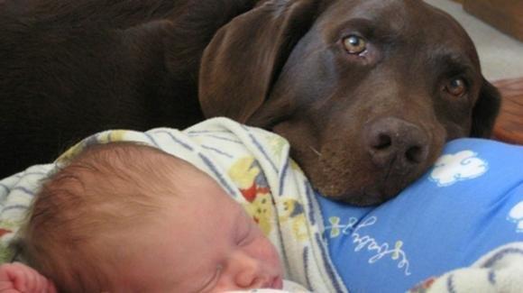 Il cane ringhia alla babysitter, rendendo possibile un'amara scoperta