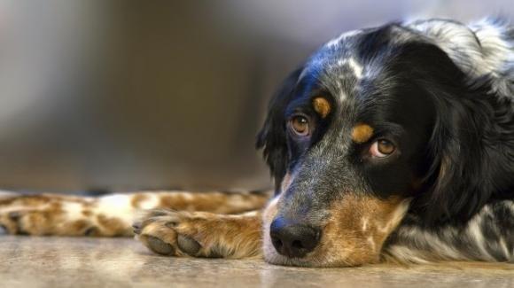 Il cane Salvo è al sicuro dopo l'abbandono in autostrada