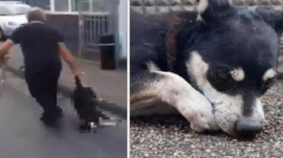 Cane preso a bastonate nel Napoletano, denunciato un pensionato
