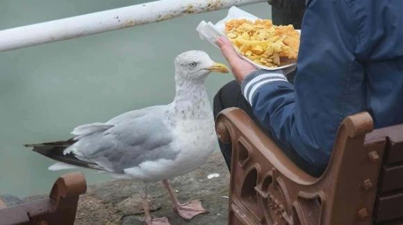 Fissare i gabbiani impedisce loro di rubarti il cibo