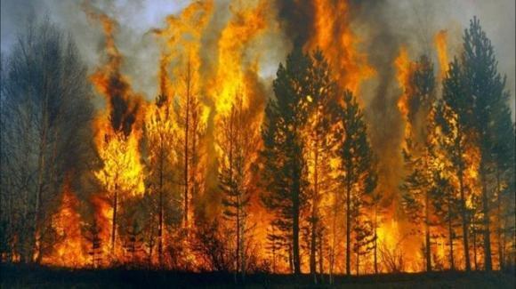Incendi: la lunga stagione del fuoco non promette bene