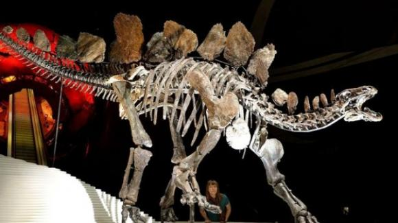 Scoperto il più antico fossile di stegosauro: risalirebbe a 168 milioni di anni fa