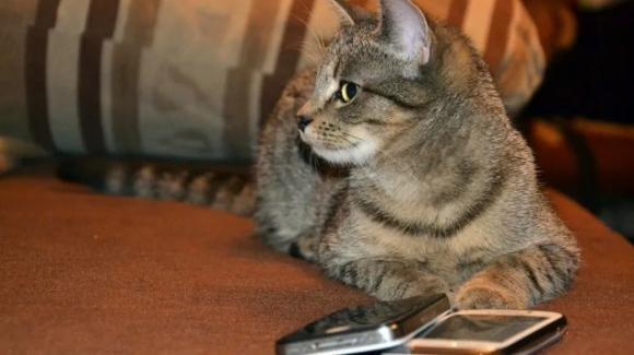 Costa Rica, gatto arrestato per favoreggiamento: introduceva cellulari in carcere