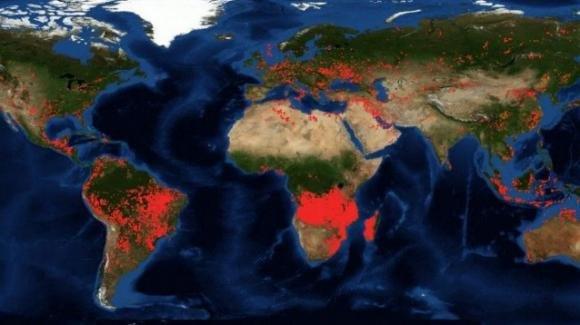 Il 2019 ha distrutto le foreste mondiali
