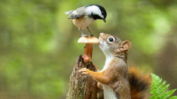 Lo scoiattolo decodifica il canto degli uccelli per trarne vantaggio: lo studio dell'Oberlin College