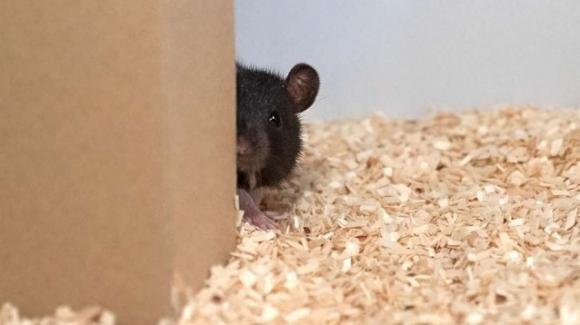 Anche i topi giocano a nascondino e si divertono