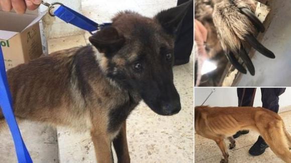 Cani sniffer USA: morti di stenti ma continuano ad essere inviati in Giordania
