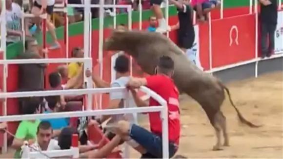Corrida in Spagna, toro infuriato finisce nella tribuna: le riprese sono drammatiche