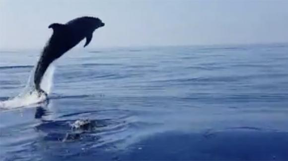 """Pescatori liberano un cucciolo di delfino impigliato nella rete: la """"mamma"""" li ringrazia a suo modo"""