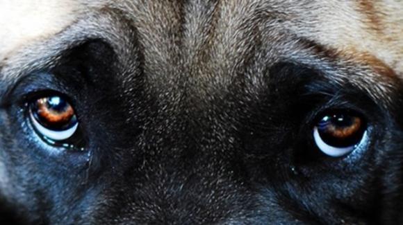 Crudele fine di un cane: ucciso con proiettili al sale