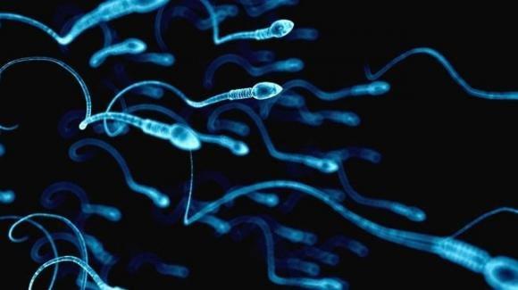 Spermatozoi avvelenati dagli inquinanti presenti nel cibo