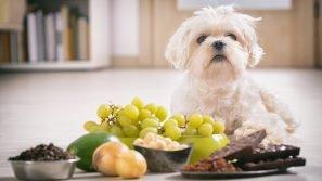 Alimentazione dei cani: i cibi tossici per i nostri amici a quattro zampe
