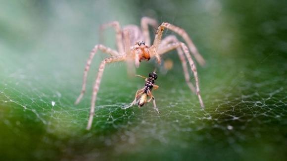 Insetti e ragni in forte declino nelle foreste tedesche
