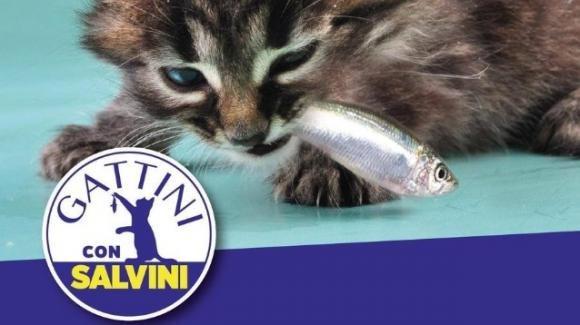 """Matteo Salvini """"arruola"""" i gatti per sconfiggere le sardine: lanciato l'hashtag #gattiniconSalvini"""