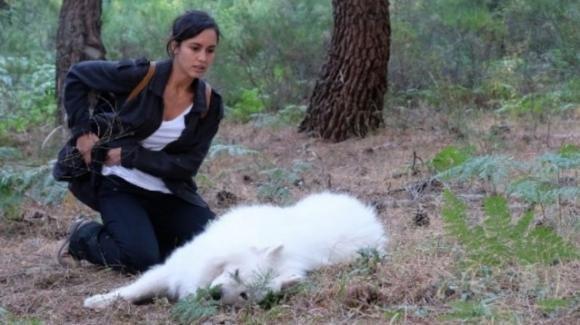 La caccia – Monteperdido, anticipazioni 24 novembre: Sara si innamora di Victor ed è sempre più vicina al rapitore