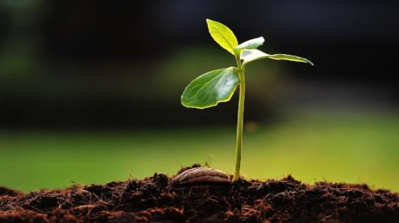 """""""Come seme che germoglia"""", il viaggio nella malattia dei sacerdoti"""