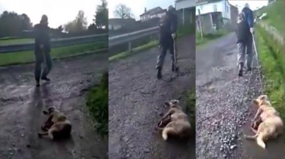 Spagna: cacciatore picchia e spara al suo cane, poi lo trascina per strada
