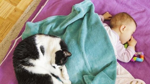 Ucraina: bimba di 9 mesi muore soffocata dal gatto di casa
