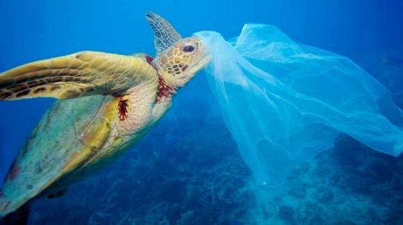 Greenpeace, un cortometraggio per salvare le tartarughe