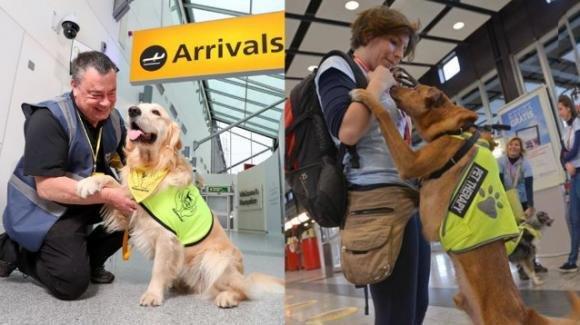 Pet therapy in aeroporto per chi ha paura di volare