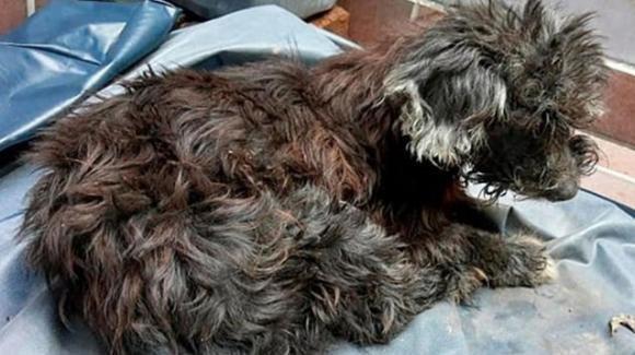 Colombia: cane abbandonato con gli occhi incollati per non fargli ritrovare la via di casa