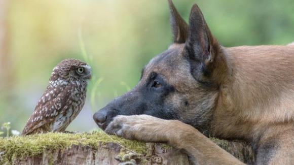 L'incredibile amicizia tra un cane e una civetta