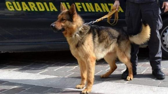 Sicilia: il cane antidroga Alex fiuta la droga nelle mutande di un turista