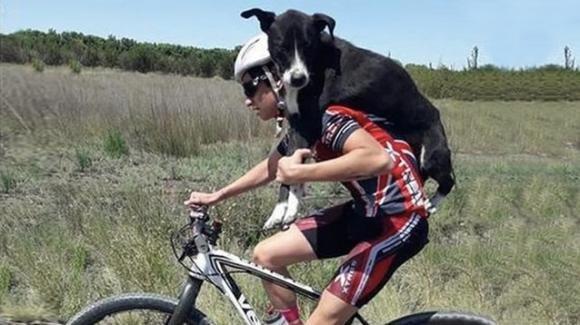 Argentina: cane randagio disidratato salvato da un ciclista
