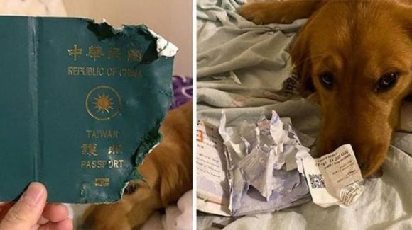 Taiwan: cane distrugge il passaporto della proprietaria che doveva recarsi a Wuhan